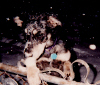 Hughes' First Snow Storm...1994